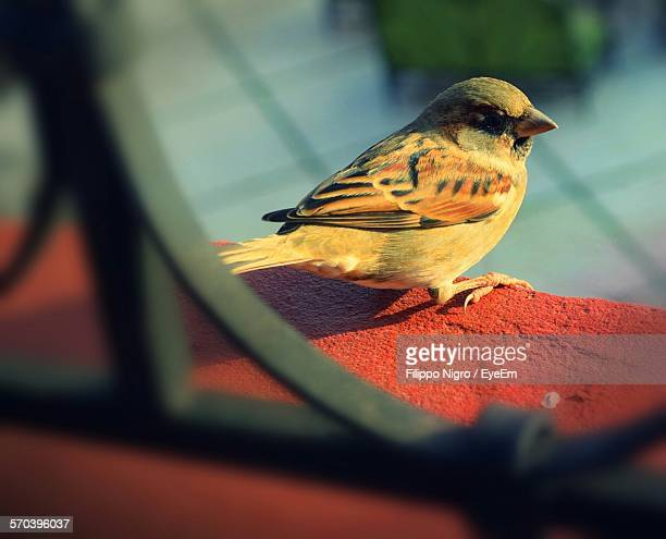 High Angle View Of Sparrow Perching On Wall Seen Through Window