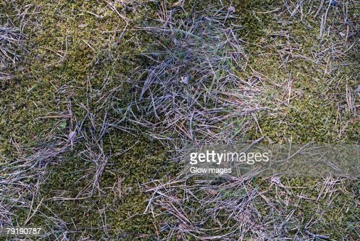 High angle view of straw on grass : Foto de stock