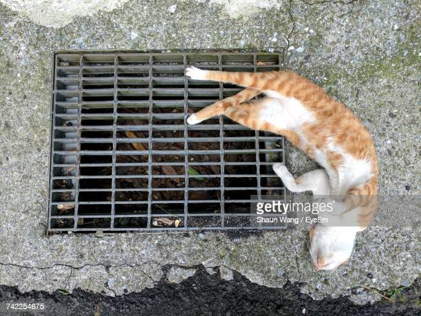 High Angle View Of Stray Cat Lying By Metallic Drainage Lid