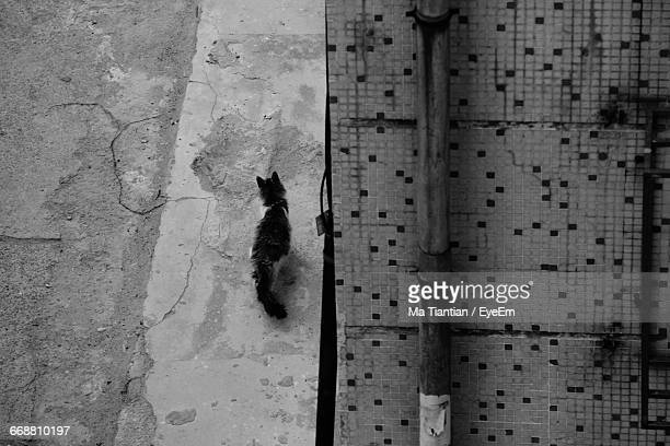 High Angle View Of Stray Cat Walking On Street By Building