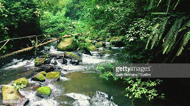High Angle View Of Stream Flowing In Forest