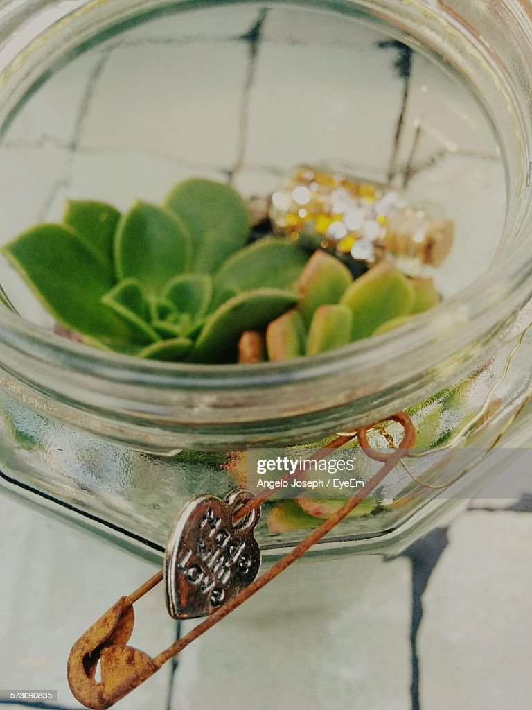 High Angle View Of Succulent Plant In Jar