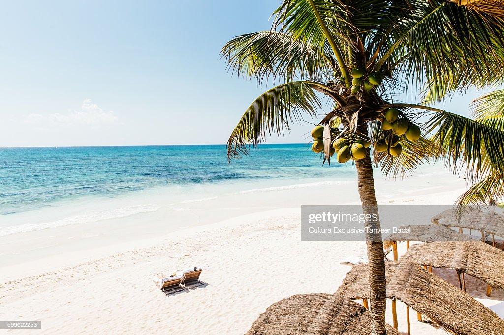 High angle view of sun loungers on beach, Tulum, Riviera Maya, Mexico