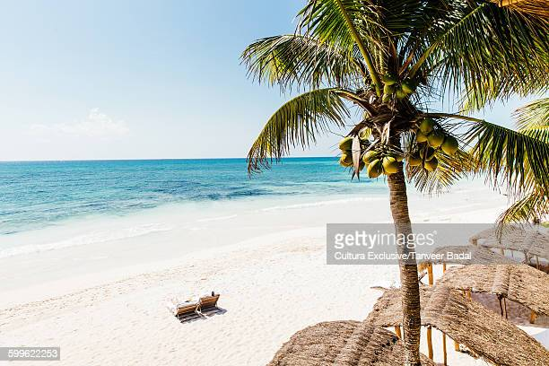 High angle view of sun loungers on beach, Tulum, Riviera Maya, Mexico
