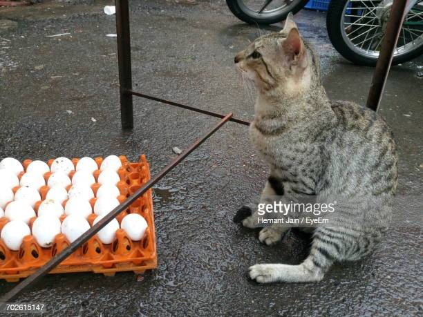 High Angle View Of Tabby Cat Sitting By Eggs In Crate On Wet Street