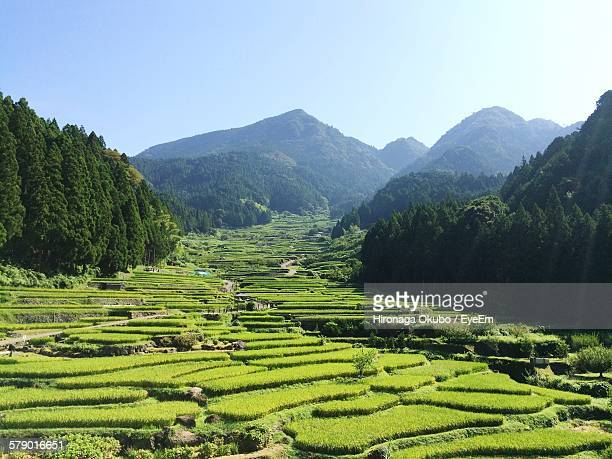 High Angle View Of Terraced Rice Fields Near Mountains