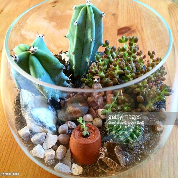 High Angle View Of Terrarium On Wood Table