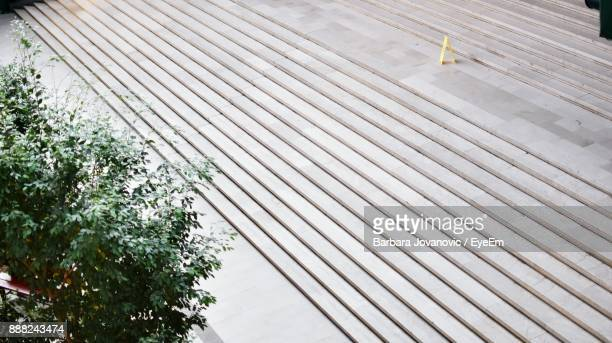 High Angle View Of Tree By Steps
