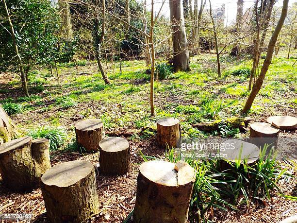 High Angle View Of Tree Stumps On Field