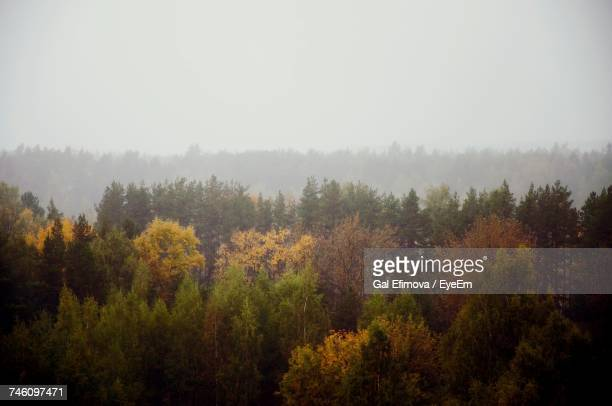 High Angle View Of Trees Against Clear Sky