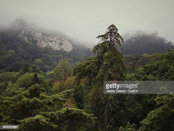 High Angle View Of Trees In Forest During Foggy Weather