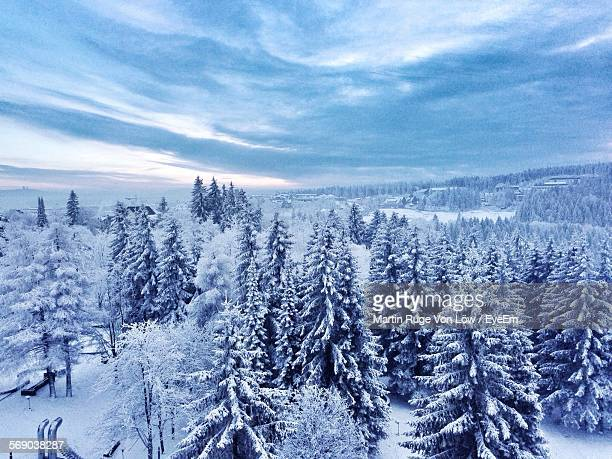 High Angle View Of Trees On Snowcapped Landscape Against Cloudy Sky