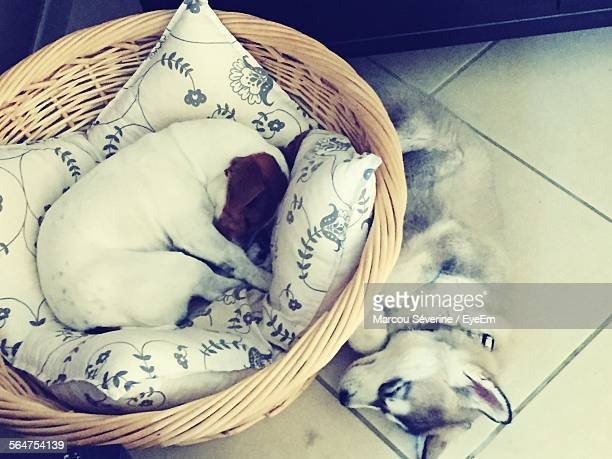 High Angle View Of Two Dogs Sleeping On Floor