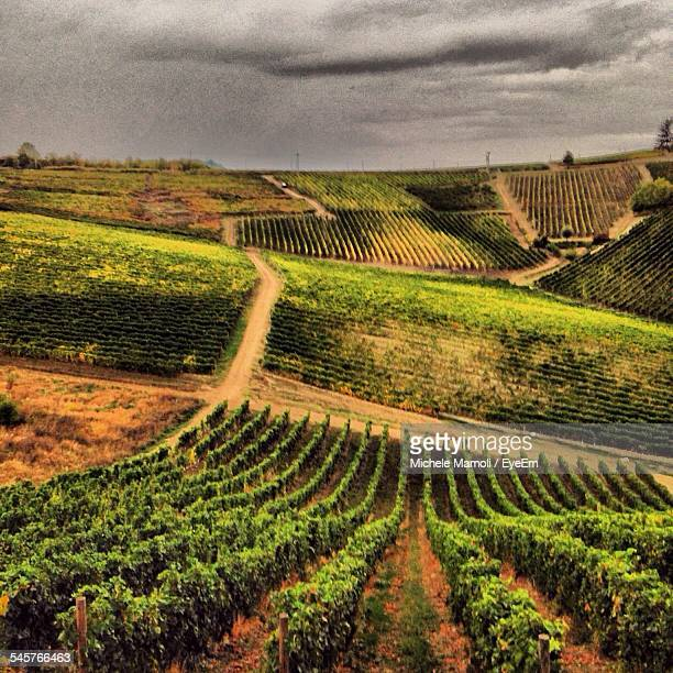 High Angle View Of Vineyard Against Cloudy Sky