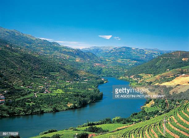 High angle view of vineyards along a river Douro Valley Portugal
