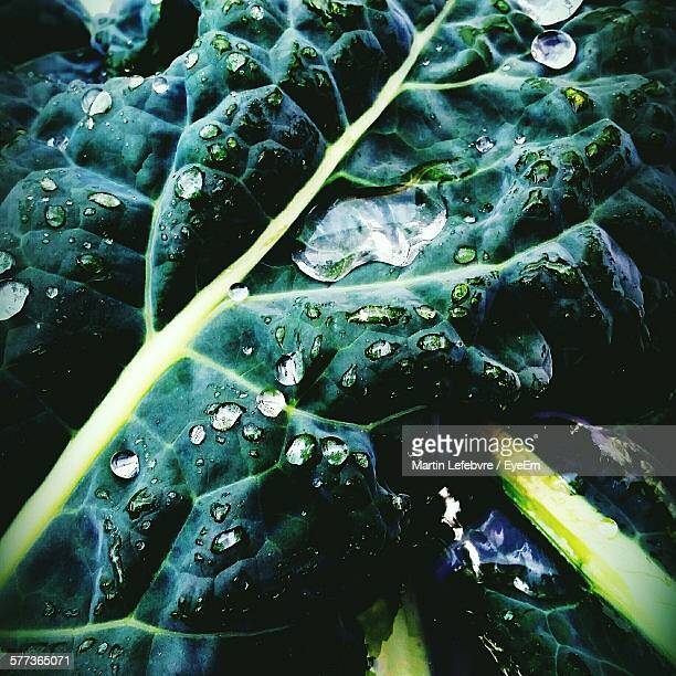 High Angle View Of Water Drops On Kale Leaf