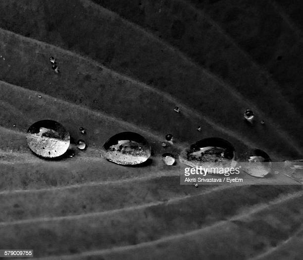 High Angle View Of Water Drops On Leaf