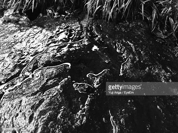 High Angle View Of Water On Rocky Field