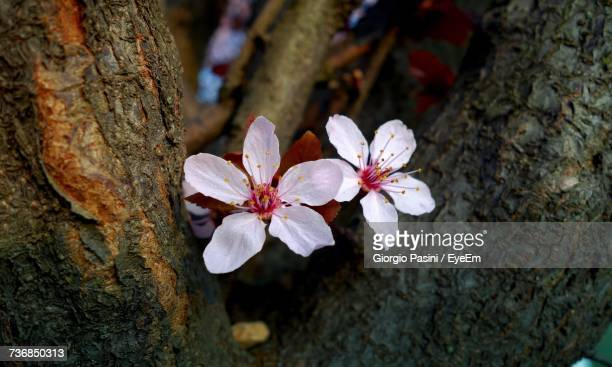 High Angle View Of White Flowers On Tree