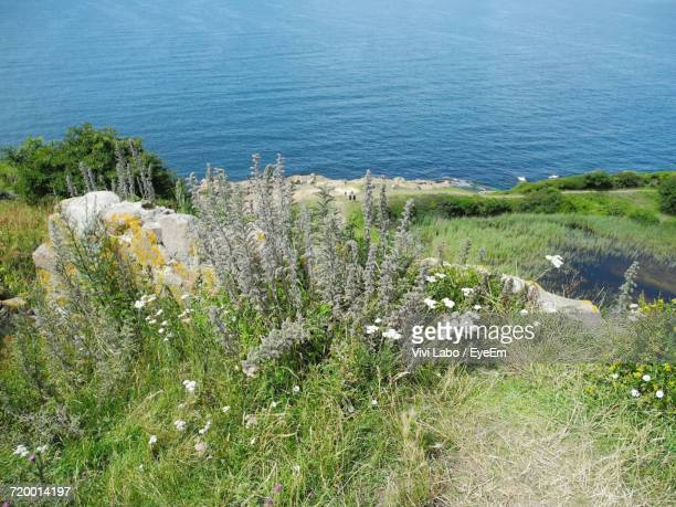 High Angle View Of Wildflowers In Sea