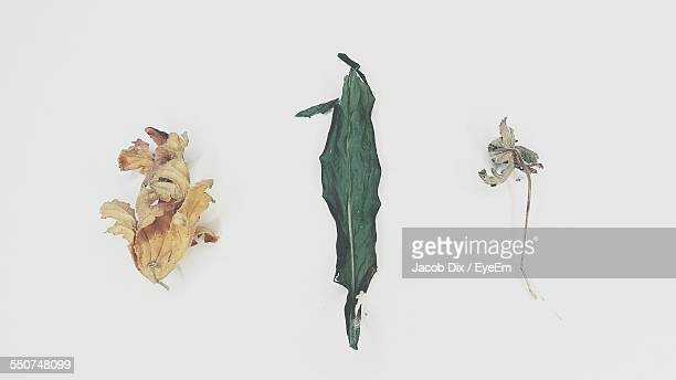 High Angle View Of Wilted Flowers With Dry Leaf On White Background