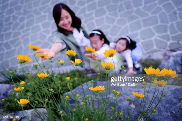 High Angle View Of Woman And Children Reaching Towards Yellow Flowers