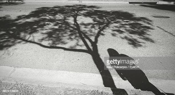 High Angle View Of Woman Standing By Tree Shadow On Street