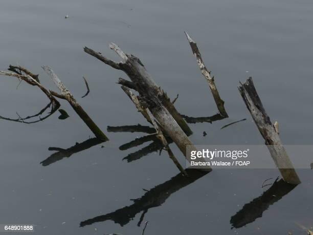 High angle view of wood reflecting on lake