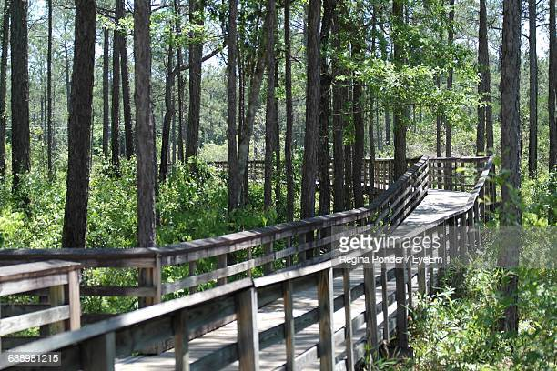 High Angle View Of Wooden Footpath In Forest