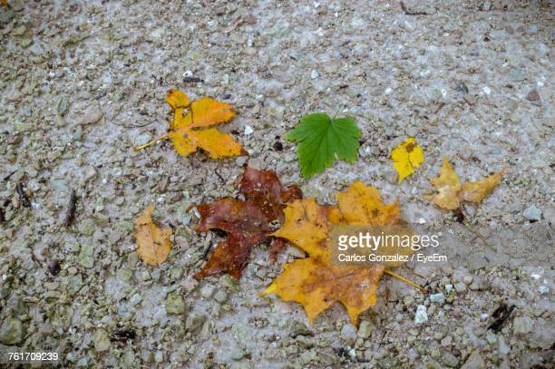 High Angle View Of Yellow Autumn Leaf
