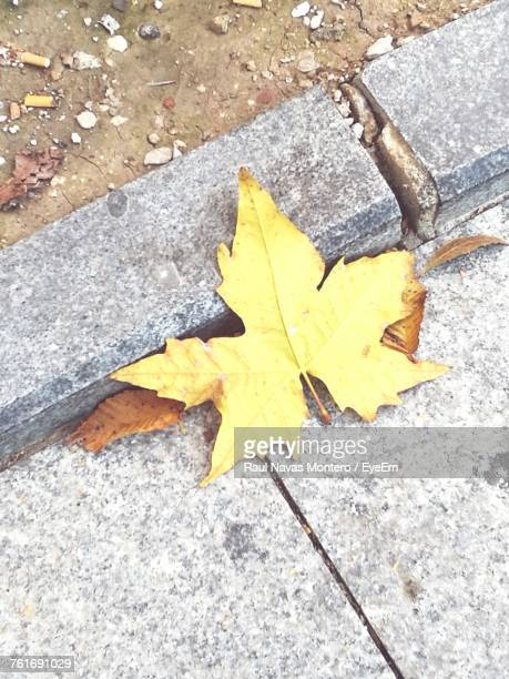 High Angle View Of Yellow Maple Leaf