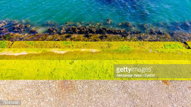 High Angle View Of Yellow Snake On Grass By Sea