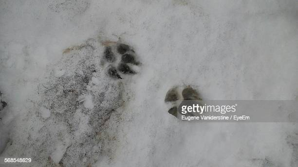 High Angle View Paw Print On Snow Covered Field