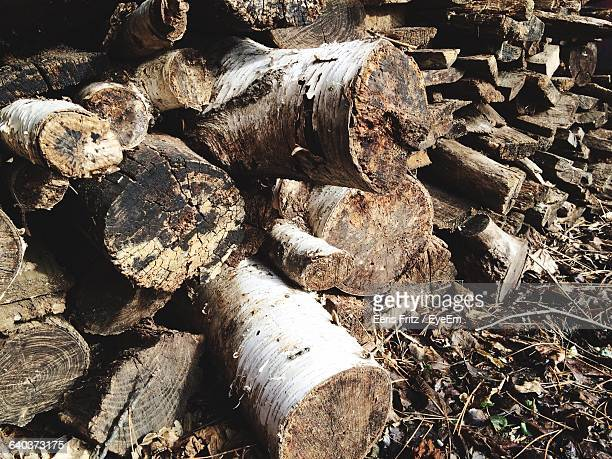 High Angle View Pile Of Firewood In Forest