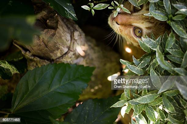 High Angle View Portrait Of Cat By Plant