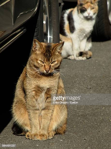 High Angle View Portrait Of Cats Sitting By Car On Road