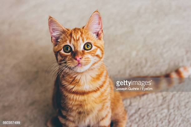 High Angle View Portrait Of Ginger Cat Sitting On Street