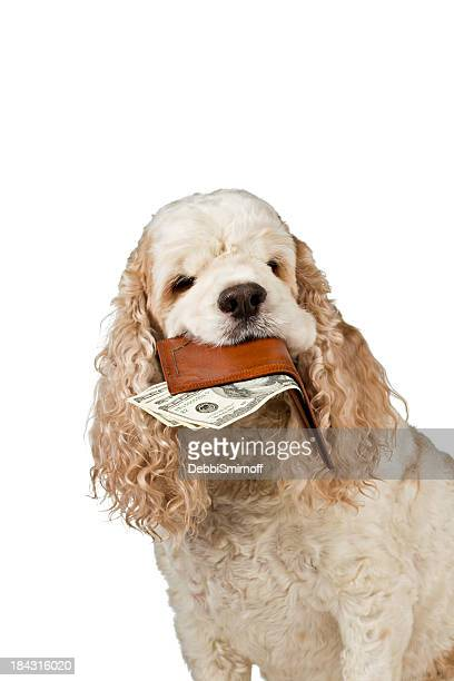 High Cost Of Pet Care