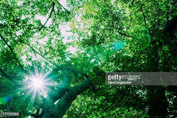 Alta energia foresta