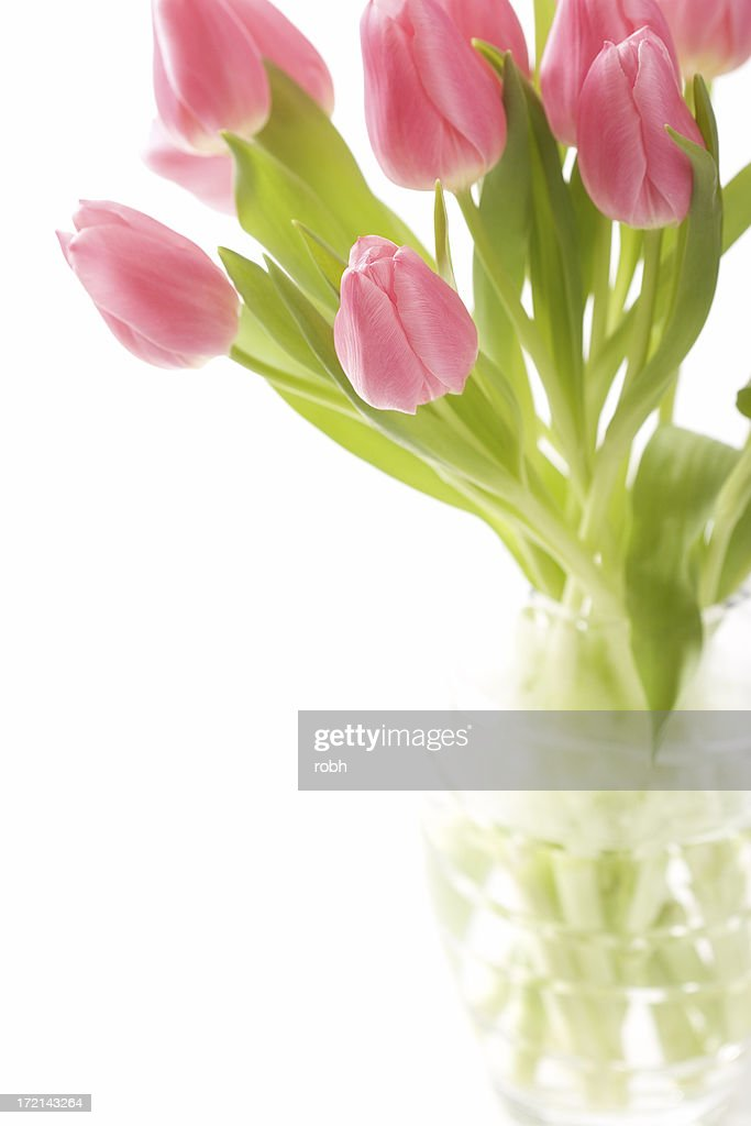High Key Tulips : Stock Photo