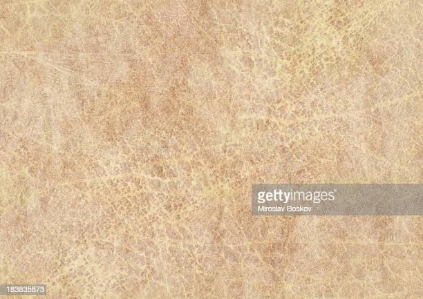 Haute résolution Peau animale Texture Grunge de vieux Papier parcheminé