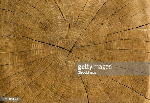 High resolution trunk profile from old, dried German Oak.