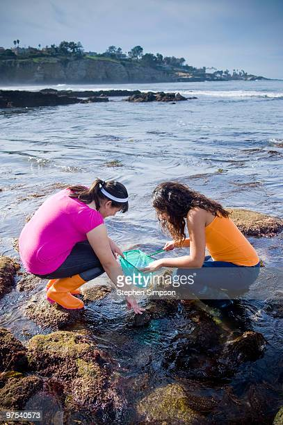 high school girls exploring tide pools