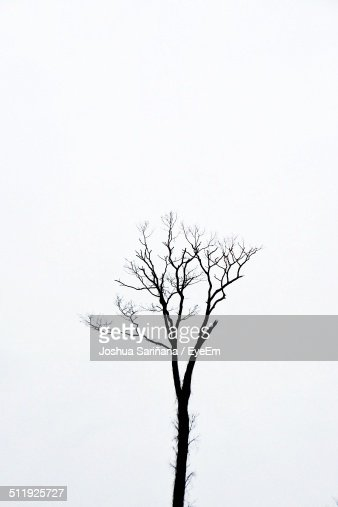 High section of bare tree against clear sky