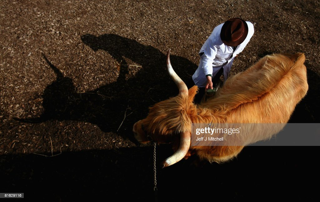 A highland cow is prepared for show, at the Royal Highland Show June 19, 2008 in Edinburgh, Scotland. The event is the biggest in the Scottish farming calendar with it expecting over 100,000 visitors over the next four day's.