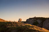 A few sheep on the hills feeding on grass with a clear sky at sunset Ilse of Mull Highlands Scotland United Kingdom UK