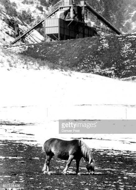 Highway Colo 8 just sout of Morrison Colo just below Cooley Gravel company A horse stands in a pasture where the snow is melting very fast Credit The...