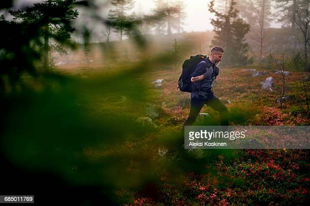 Hiker crossing park, Sarkitunturi, Lapland, Finland