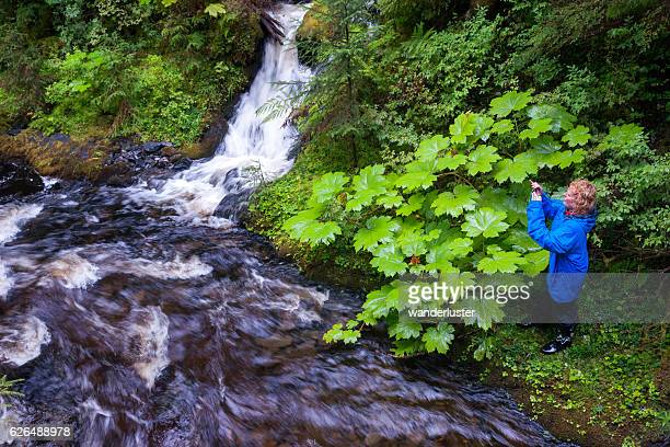 Hiker explores riverbank in rainforest