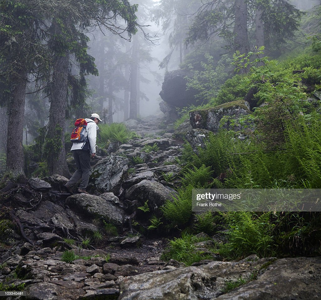 hiker in a fairy tale forest : Stock Photo
